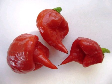 Chilli paprička Carolina Reaper