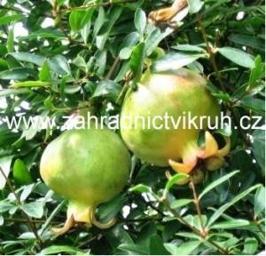 Gran�tov� jablko Nana