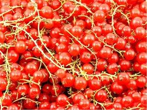 Rybíz stromkový červený LOSAN
