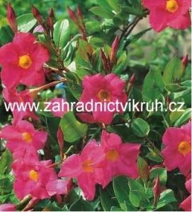 Sundavilla růžová