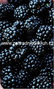 Ostružina beztrnná BLACK SATIN