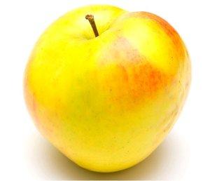 Jabloň BOHEMIA GOLD - podnož M9