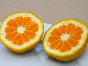 Mandarinka SILVERHILL - roubovaná