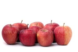 Sloupovitá jabloň POMREDROBUST