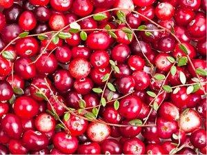Brusinka cranberry BIG PEARL