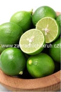 Citrus WEST INDIAN - roubovan�