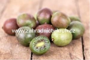 Kiwi arguta GENEVA - samice, extra 2L