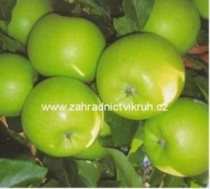 Sloupovitá jabloň SONET