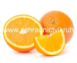 Pomeranč MORITA - roubovaný