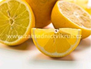 Citron�k PAVLOVSK� - roubovan�