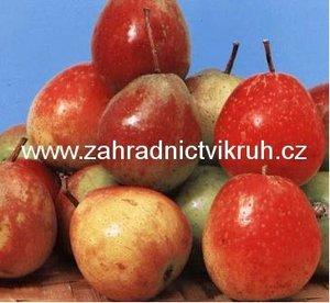 Oskeruše - Sorbus domestica