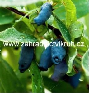 Zimolez kamčatský Bakczarskaja - extra 2l