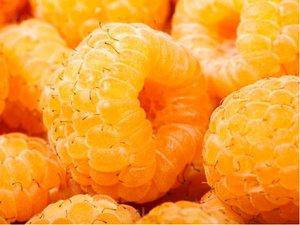 Maliník žlutý SUGANA GELB® - stáleplodící