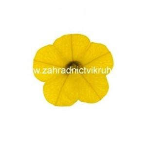 Million Bells Pure Yellow - žlutý