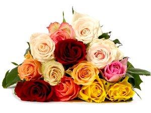 Růže v kontejneru