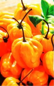 "Chilli paprička ""Habanero Yellow"""