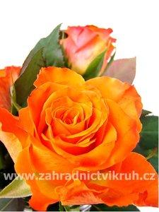 Růže polyantka ORANGE SENSATION - oranžová