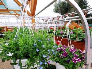 Balkonové rostliny v závěsném květináči