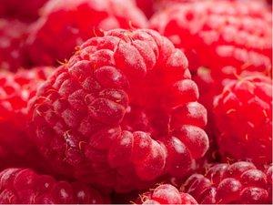 Maliník PREUSSEN - červený, jednouplodící