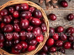 Brusinka cranberry PILGRIM