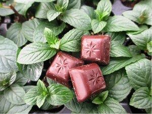 Čokoládová máta