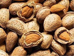 Mandloň MARCONE - podnož mandl. semenáč, v kontejneru