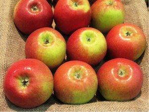 Sloupovitá jabloň CUMULUS® - podnož M26