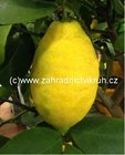 Citron�k LIMON v kv�tin��i P12