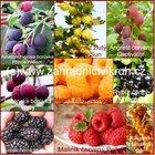 Velk� kolekce drobn�ho ovoce