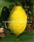 Citron�k LIMON v kv�tin��i P12
