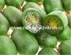 Kiwi ARGUTA - pár