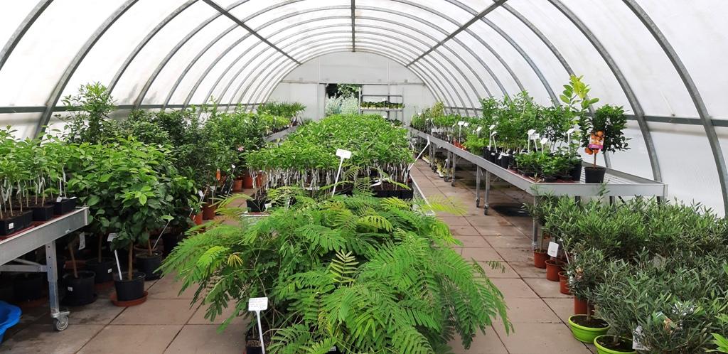 Pohled do skleníku s citrusy