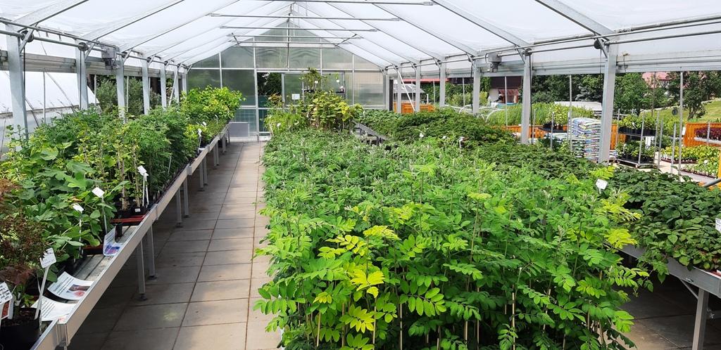 Pohled do jednoho z prodejních skleníků